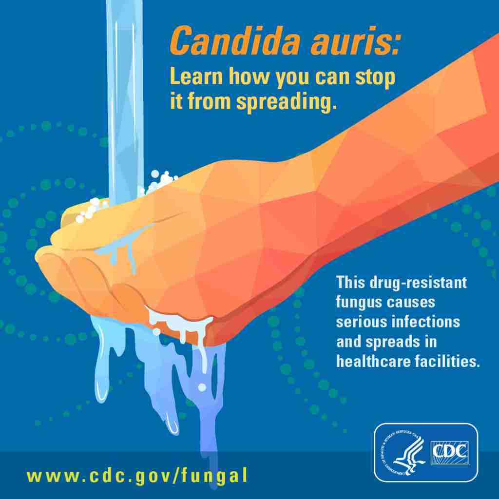 candida auris infographic from cdc